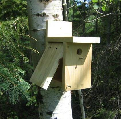 Free birdhouse plans for Best birdhouse designs